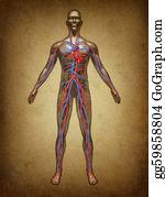 Heart-Surgery - Human Blood Circulation Grunge