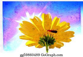 Chrysanthemum - Chrysanthemum On Aging Paper