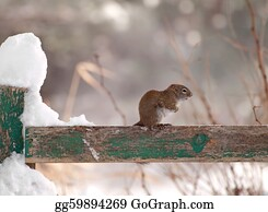Freezing-Cold - Freezing Cold Little Squirrel.