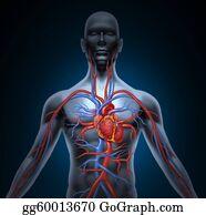 Heart-Surgery - Human Heart Circulation