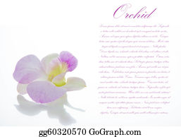 Orchid-Flower - Orchid Flower On White Background With Area For Your Text