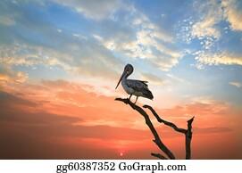 Birds-On-The-Tree-Silhouette - Pelican  Sleep On A Tree