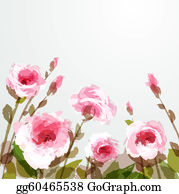 Pink-Rose - Roses