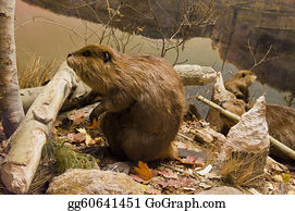 Sense-Of-Smell - Beavers Working