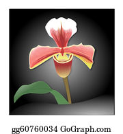 Orchid-Flower - Lady Slipper Orchid