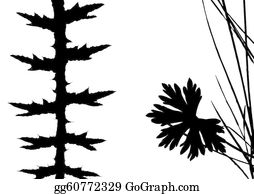 Prairie - Herb Silhouette On White Background,