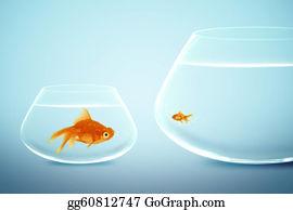Fat - Big And Small Goldfish