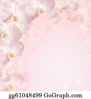 Orchid-Flower - Wedding Background