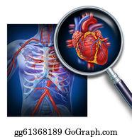 Heart-Surgery - Anatomy Of The Human Heart