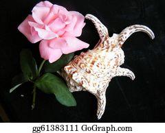 Pink-Rose - Or Yehuda Rose & Sea Shell 2010