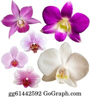 Orchid-Flower - Collection Of Orchid Flower Isolated On White