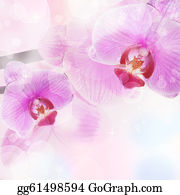 Orchid-Flower - Orchid Flower Background, Tender Blur Colors And Bokeh
