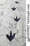 Baby-Footprint - Dinosaur Footprints