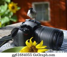 Bird-Feeder - Bird;the Titmouse  Sitting On The Camera