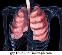 Human-Kidney-Medicine-Anatomy - Human Lungs X-Ray