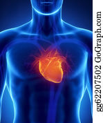 Heart-Surgery - Focused On Human Heart