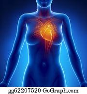 Heart-Surgery - Woman Glowing Heart Anatomy