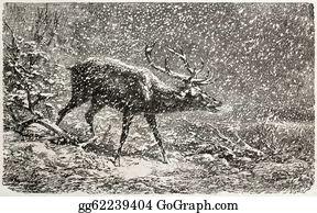 Antler - Deer