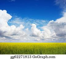 Plantation -  The Field Of Rape Flowers And The Blue Sky