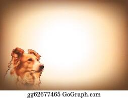 Border-Collie - Dog Animal Lovers Writing Card