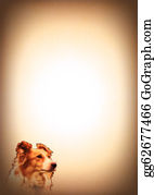 Border-Collie - Dog Animal Lovers Writing Pad