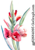 Gladiolus - Beautiful Flowers, Watercolor Painting