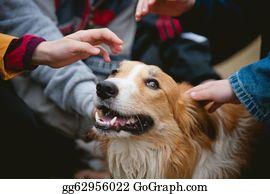 Border-Collie - Children Caress Red Border Collie Dog