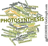 Leaf-And-Oxygen - Word Cloud For Photosynthesis