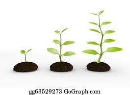 Plant-Life - Green Plant