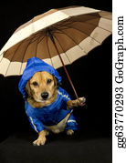 Umbrella - Rain Dog
