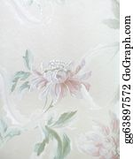Chrysanthemum - Background