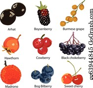 Boysenberry - Set Of Different Berries