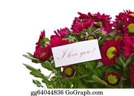 Chrysanthemum - Chrysanthemums