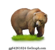 Furry-Tail - Walking Adult Bear On A Grass. Isolated Realistic Illustration On White Background