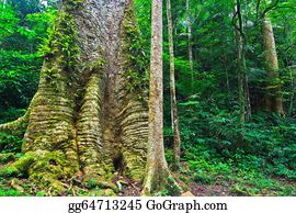 Big-Tree - Big Tree In The Forest Thailand