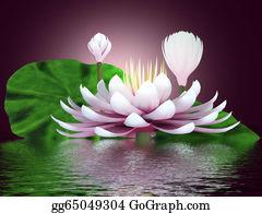 Meditative - Beautiful Lotus Flower