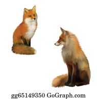 Poultry - Adult Shaggy Red Fox Sittng With Big Fluffy Tail.  Isolated Illustration On White Background.