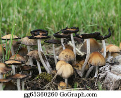 Tall-And-Short - Tall And Short Toadstools