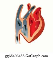 Heart-Surgery - Anatomy Of The Heart