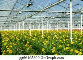 Cultivation - Flowers In Greenhouse