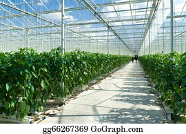 Cultivation - Commercial Greenhouse