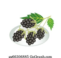 Boysenberry - A Plate Of Blackberries Isolated On White