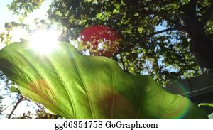 A-Palm-Tree-Sign-In-Yellow-And-Black - Elephant Leaf 1