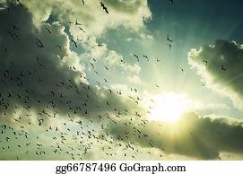 Birds-On-The-Tree-Silhouette - Beautiful Sunrise