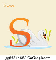 Swan - Animal Alphabet With Swan