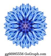 Chrysanthemum - Blue Cornflower Mandala Flower Kaleidoscope Isolated On White