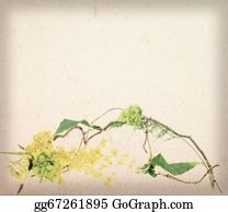 Grape-Leaf - Yellow Flower With Creeper (vine Grape) Leaves On Worn Paper