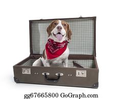 Sense-Of-Smell - Beagle With A Suitcase On A White Background In Studio