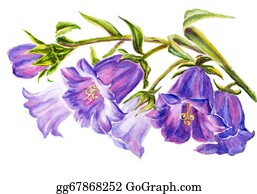 Blue-Bell - Watercolor Painting Of The Bell Flowers