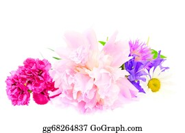 Daffodil - A Bouquet Of Peony, Carnation And Clover Isolated On White Background